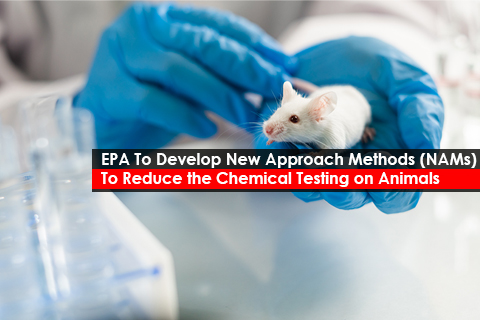 EPA To Develop New Approach Methods (NAMs)  To Reduce the Chemical Testing on Animals